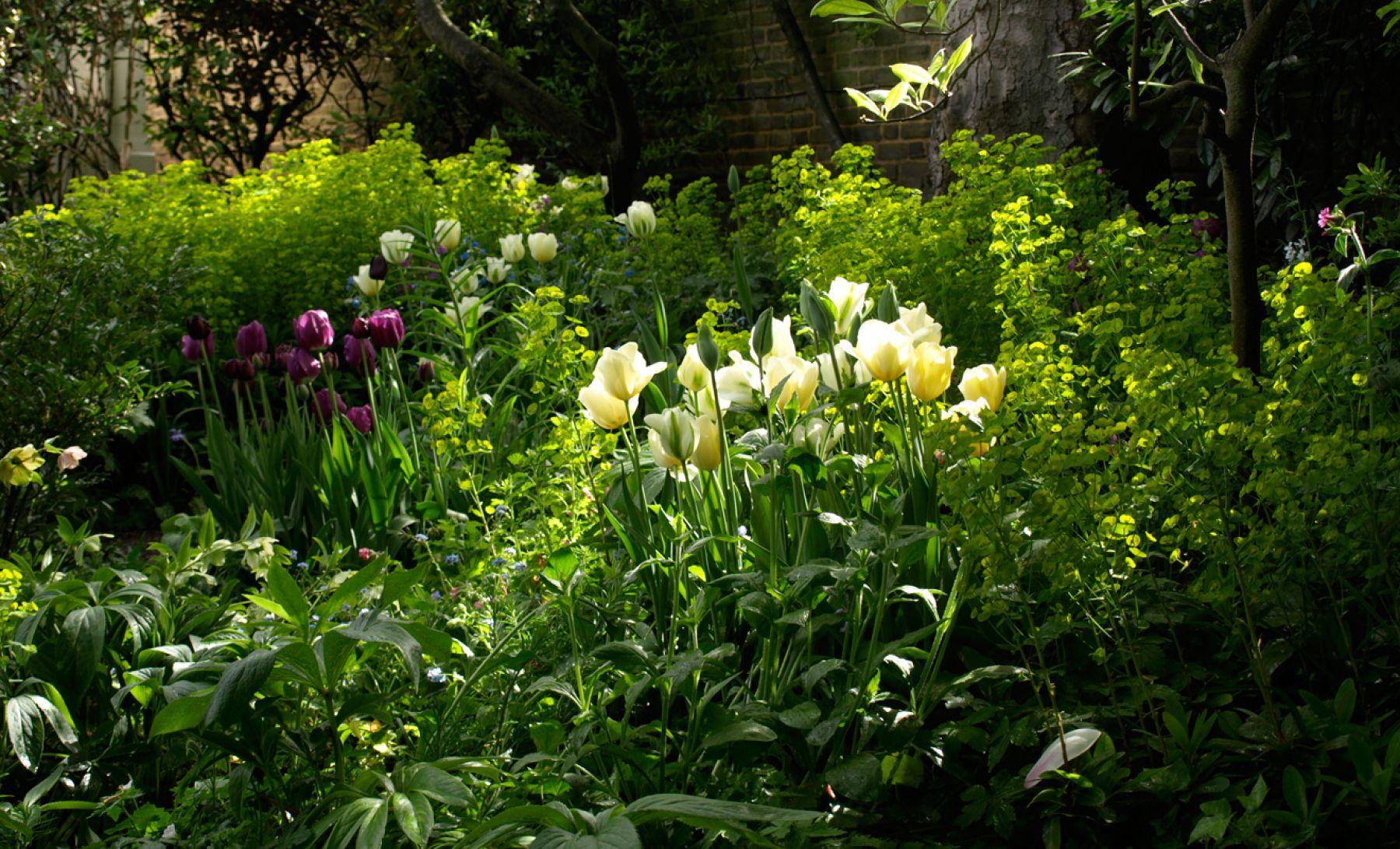 <p>Planting consultant</p>  <p>Landscape &amp; Garden Design</p>